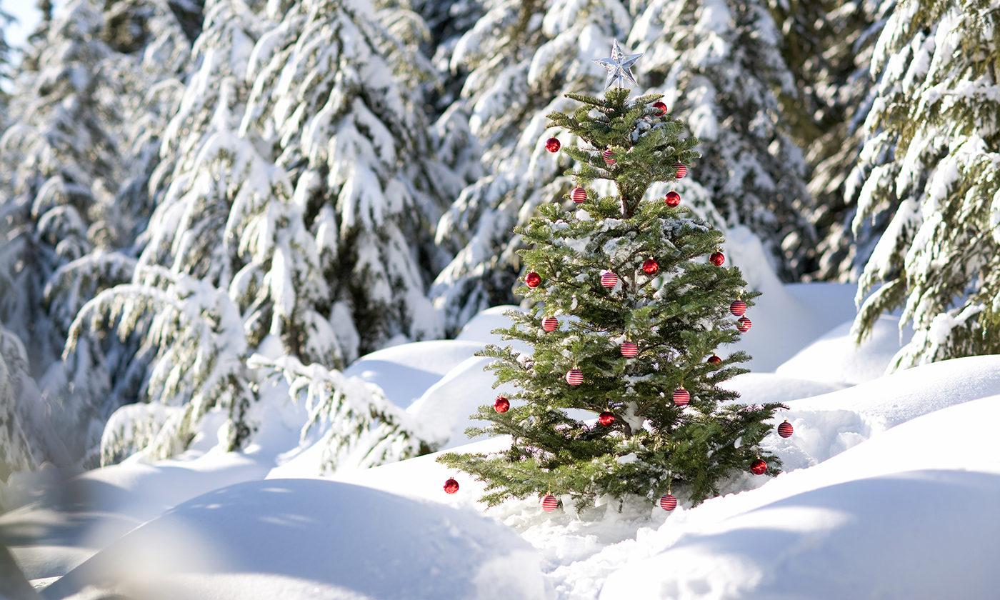 Oh, Christmas Tree… Fake Christmas Tree?