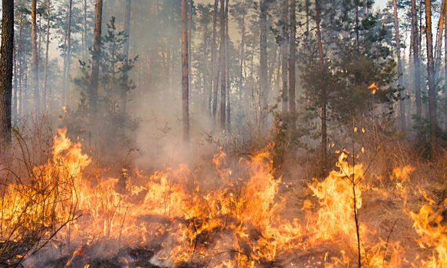 Let Wildfires Burn: Study Shows Forests Bounce Back on Their Own