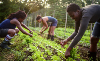 Farm work at Soul Fire Farm. Photo by Capers Rumph.