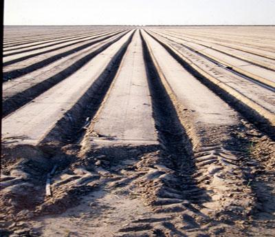 Industrial Farming Visual Learning