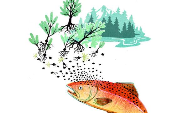 salmonjustice_primary.jpg
