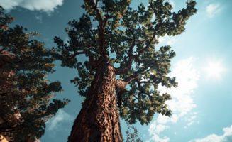Nature Economy.jpg